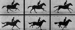 Eadweard Muybridge: Photographs of Motion
